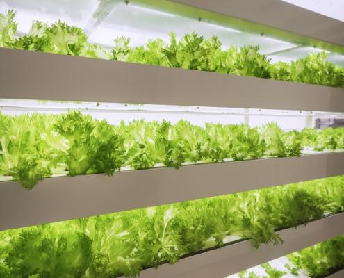 "Indoor ""Farm in a Box"" growing lettuce"
